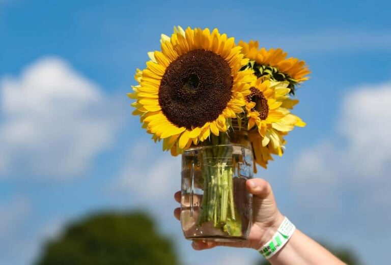 Cut your own bouquet at our sunflower farm